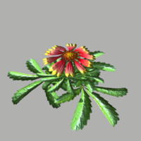 flower 14 fbx