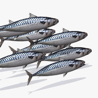 mackerel 3d model