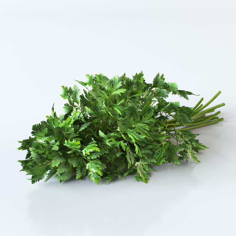 parsley 3d model