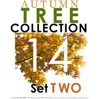 14 Autumn Tree Collection - Set TWO