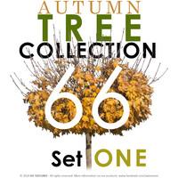 66 Autumn Tree Collection - Set ONE