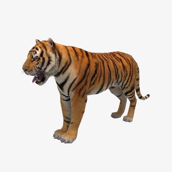 cat feline tiger obj