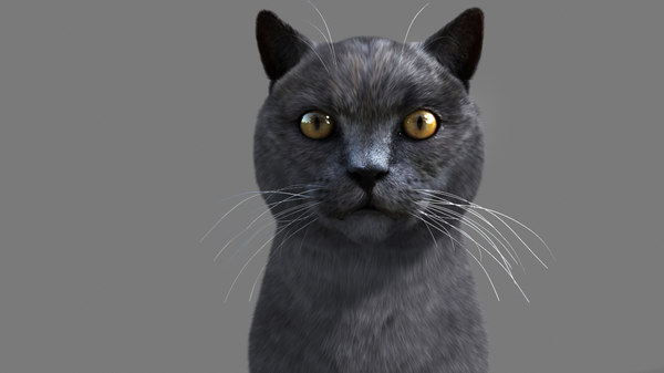 3ds max cat hairfarm animation