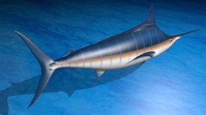 3d model realistic blue marlin poses