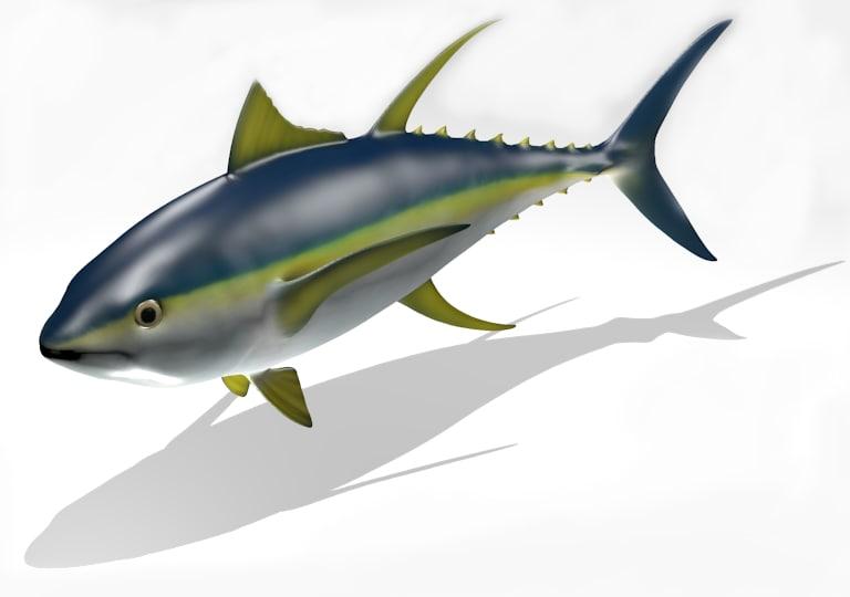 3d model of beautiful yellowfin tuna poses