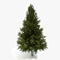 Pine Tree 2