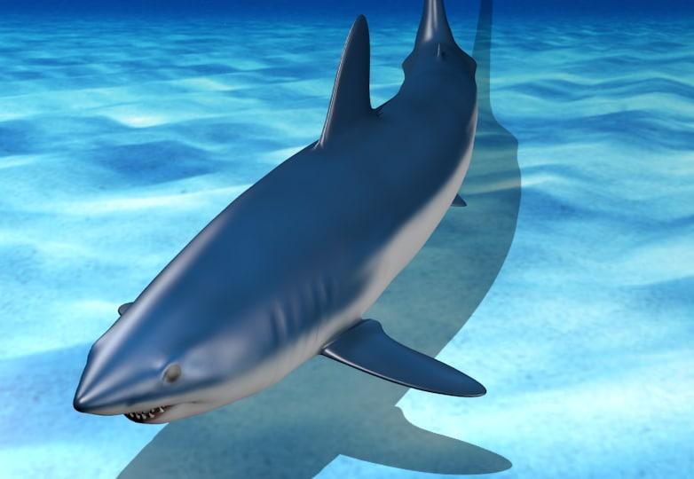 maya mako shark - poses