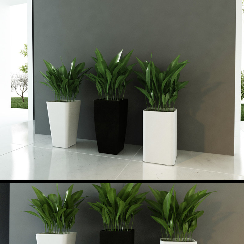 contemporary plants mini 3d max