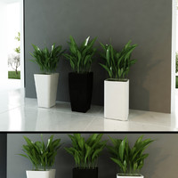 Contemporary Plants mini