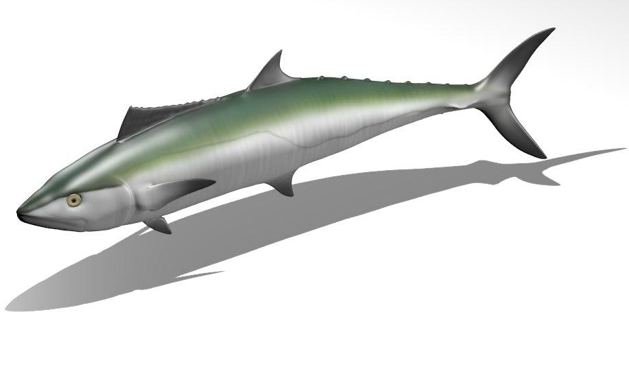 kingfish - king mackerel