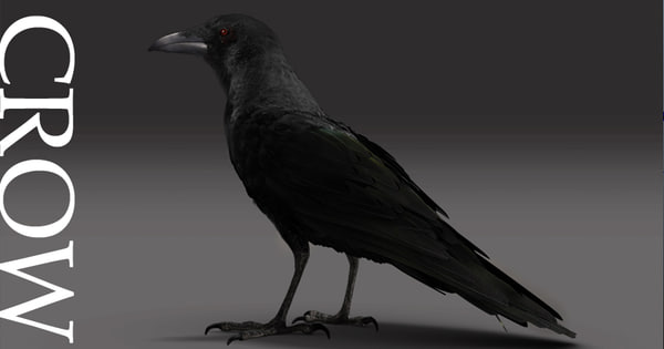 3d 3ds setup crow