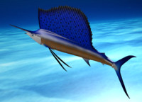 obj sailfish fish poses