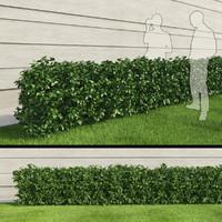 Hedge III