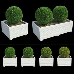 3d boxwoods model