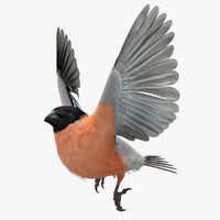 eurasian bullfinch 3d model