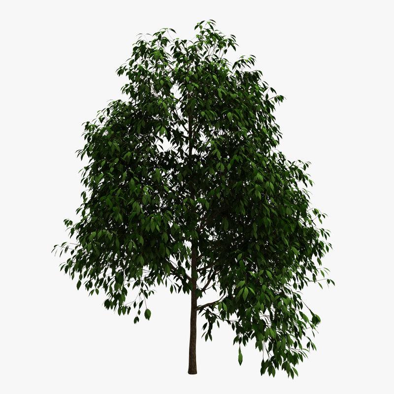 3d max tree plants