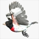 Grosbeak 3D models