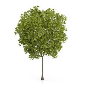 3ds max honey locust tree gleditsia