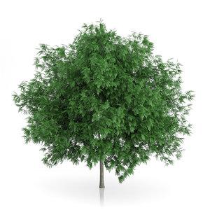 max rowan tree sorbus aucuparia