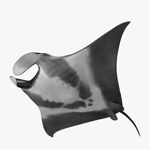 manta birostris giant oceanic 3d model