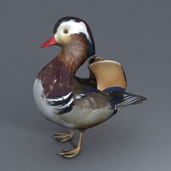 3d fbx duck