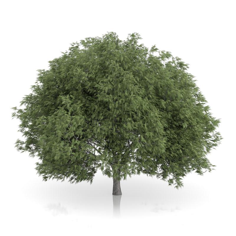 3d crack willow tree salix