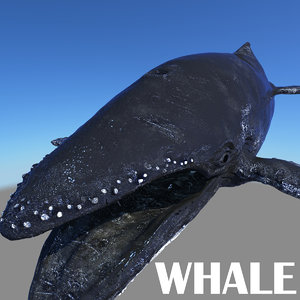 3dsmax whale displacement