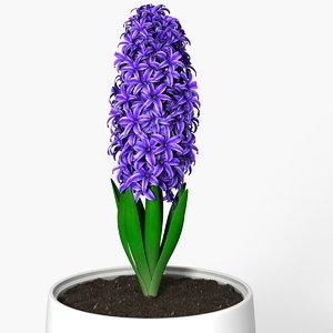 hyacinth 3d model