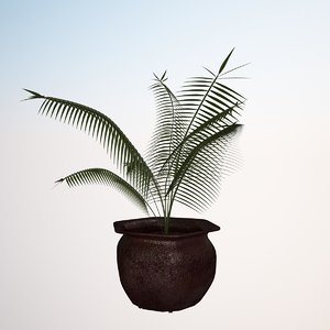 plant cyclad 3d obj