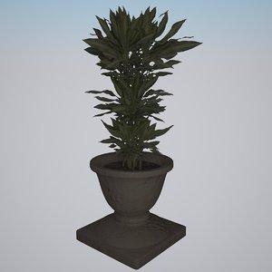 plant dracaena fragrans cintho 3d max