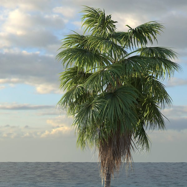 3d washingtonia palm tree