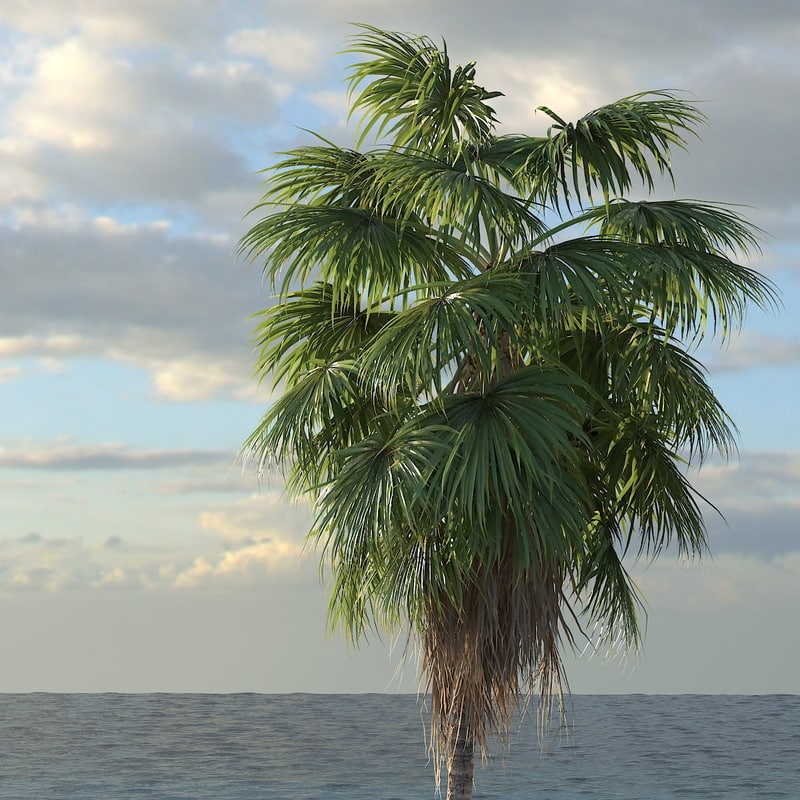 3d washingtonia palm tree