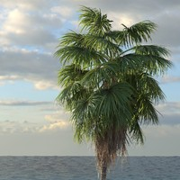 Palm Tree Washingtonia 01