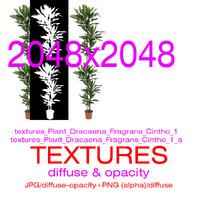 Textures Plant Dracaena Fragrans Cintho 1