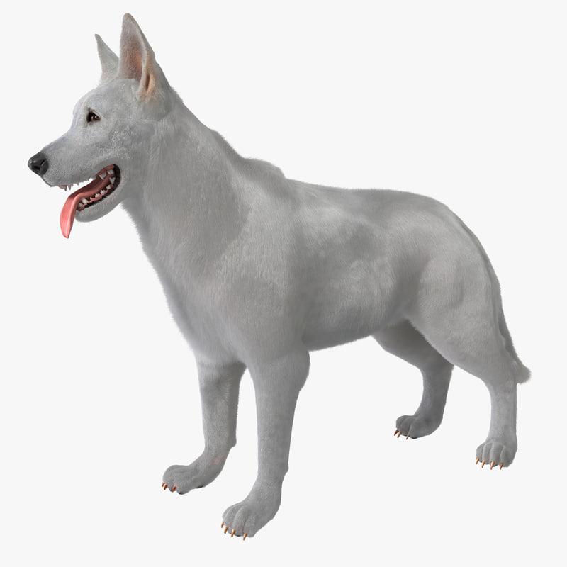 max white shepherd dog rigged