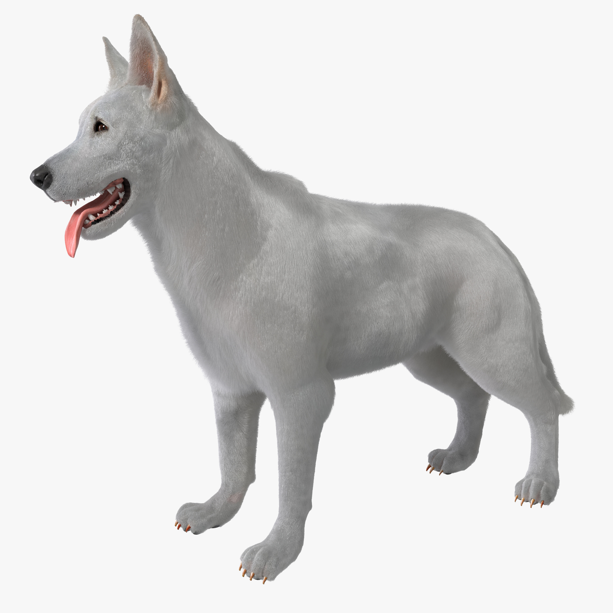 max white shepherd dog rigged