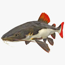 catfish 3D models