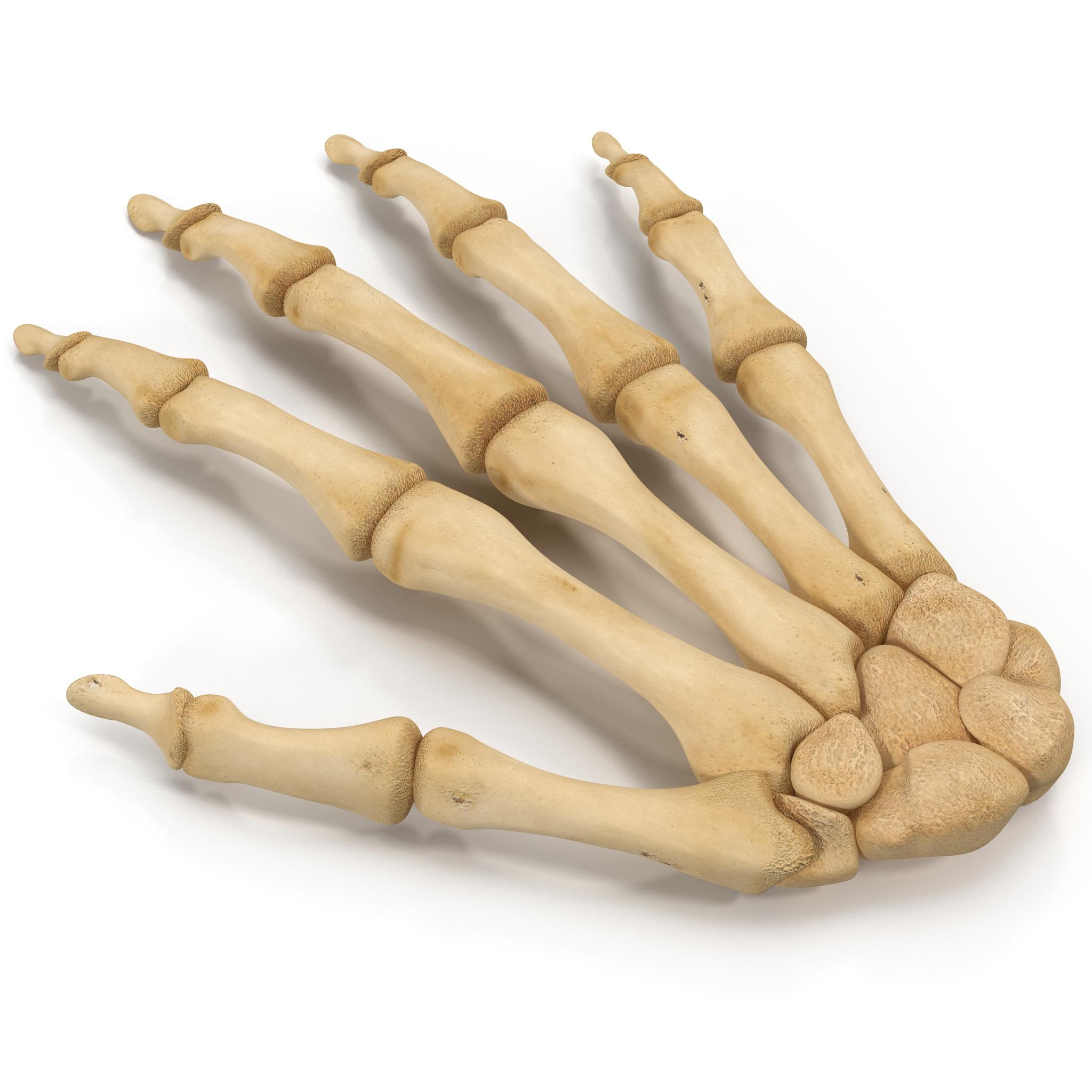 skeleton hand 3d 3ds