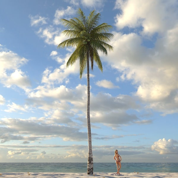 coconut palm tree 3d max