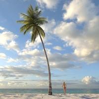 Palm Coconut 12