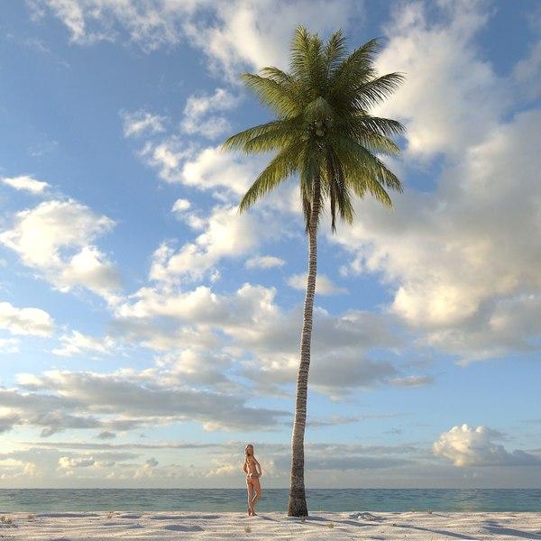 max coconut palm tree