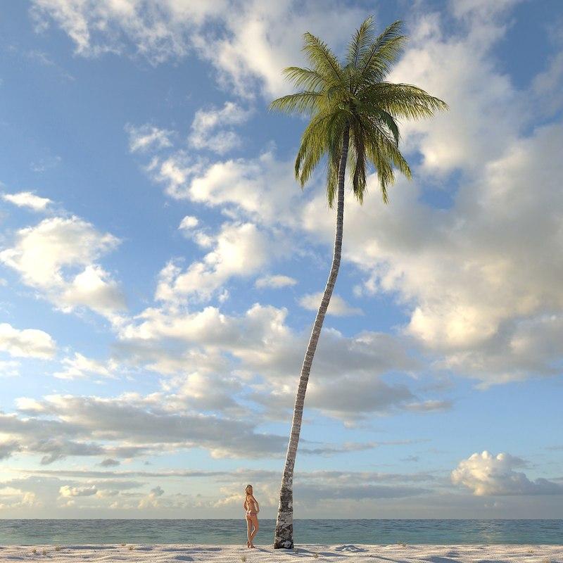 3d model coconut palm tree