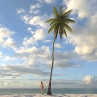 Palm Coconut 06