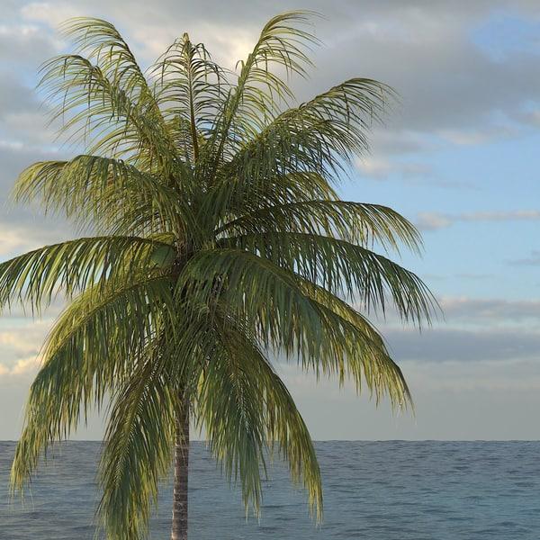 coconut palm tree 3d model