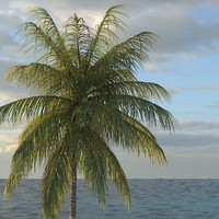 coconut palm tree 3d model