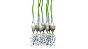 abscisic acid plant 3d model