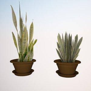 3ds max plant sansevieria zeylanica 3