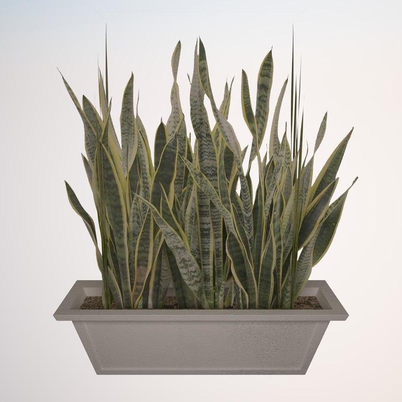3ds plant sansevieria zeylanica 4