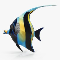 3d moorish idol blue rigged model