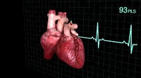 Human heart (animated)